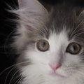 猫が失明する7つの原因と治療法