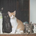 猫を飼う時の6つの覚悟!飼わない方がいい人とは