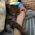 猫にとっての飼い主とはどんな存在?