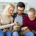 猫の性格は何で決まる?毛柄や飼い主からの影響など