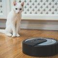 猫がルンバに乗る6つの理由!自宅で使う時に注意すること