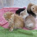 捨て猫が外界で生きていくことは難しい?その理由や見分け方について