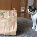 お米の紙袋を猫トンネルに改良してみた