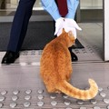 美術館に入りたい猫と警備員さんの攻防戦!あの猫ちゃん達はあの後ど…