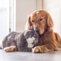 猫が犬を嫌う4つの理由