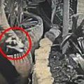 子猫を捨てる瞬間が監視カメラに!