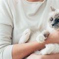 猫にインターフェロンを投与すると?効果と副作用など