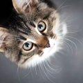猫が毛玉を吐く理由とは?異常じゃないけど病気の可能性も