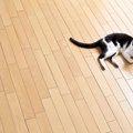 猫にフローリングって安全?ひっかき対策から素材の選び方まで