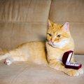 猫の指輪がかわいい!おすすめ商品3選