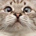 猫が鼻を鳴らす4つの意味と気持ち