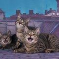 毎晩悩まされた「猫の夜鳴き」私が試した2つの対処法