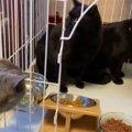 餌場の撤去で路頭に迷う猫たち…緊急保護で新たな未来へ!
