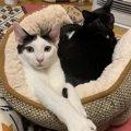 寒い夜に!猫の就寝時にしたい防寒対策5つ