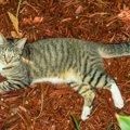 ヘミングウェイが愛した幸運の猫とは