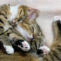 どうして猫はずっと寝てるの?夢は見る?睡眠に関する豆知識