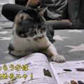 暇そうな猫ちゃんと一緒にカタログを見る