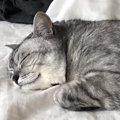 ペットロスを癒してくれた2代目猫が最高のパートナーになるまで