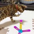 新しいおもちゃ!子猫、大人の猫それぞれの反応!