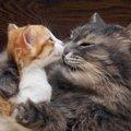 猫の乳離れはいつ?しない時の対処法やおすすめ離乳食