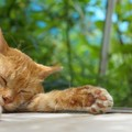 猫が『熱中症』になっている時の初期症状3選!早めに見極めて適切な…