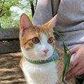 猫に『信頼』されたい飼い主がすべきこと5つ