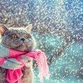 猫が『雪』を食べると危険!その理由と考えられる症状とは?