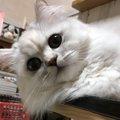 まるでストーカー!!飼い主さんの後をついてまわる猫の気持ち