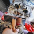 ひとりでブラッシングできるニャ♡ブラシにスリスリしちゃう猫さん!