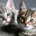 猫のキャラクターといえばこれ!人気ランキングTOP10