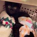 車に跳ねられネズミ捕りにかかった子猫を緊急レスキュー!No.4