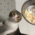 おやつ!おやつ!早く食べたい猫さん!