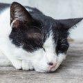 猫の目の上がはげる原因やその特徴