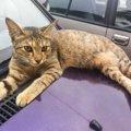車に乗る前『猫バンバン』の正しいやり方5STEP