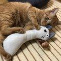 猫が『けりぐるみ』の虜になる理由3つ