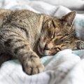 猫が『布団』に入ってくる心理3選!占領された時の対策は?