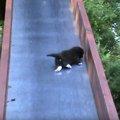 「ママ助けてニャ!」滑り台から落ちる仔猫を助ける優しい母猫