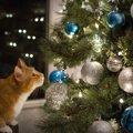 猫とクリスマスツリーの攻防戦!壊されないための5つのアイデア