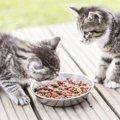 猫が食物アレルギーになった時の症状と対策、フードの選び方