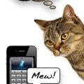 猫の言葉がわかるアプリ「人猫語翻訳機」の機能と使い方について