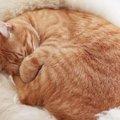 猫の毛は何本?抜けても抜けても減らないその謎を解明します!!