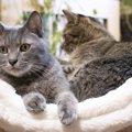 一人暮らしで猫と一緒に暮らす時に気をつけた方が良いこと4つ