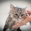 猫の入浴方法と注意点