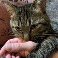 『人が好き』な猫がする仕草や行動4つ