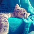 猫を『抱っこ好き』にしたい飼い主がすべきこと3つ
