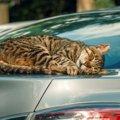 野良猫がよく『駐車場』にいる5つの理由!絶対しちゃダメな行為とは?