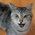 ちょっと珍しい鳴き声から読み解く猫の気持ち5つ