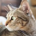 猫が飼い主に『後ろ姿』を見せる3つのワケ