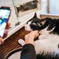 思い出を可愛く残そう♡猫を「SNOW」で撮る時の7つのコツ