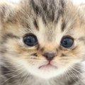 猫が最強に可愛い!3つの理由、エピソード